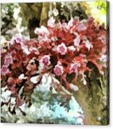 Carambola Flower Acrylic Print