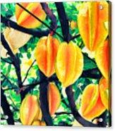 Carambolas Starfruits Acrylic Print