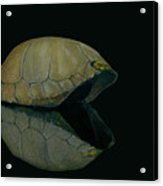 Carapace Acrylic Print