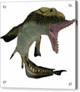 Carboniferous Edestus Shark Acrylic Print