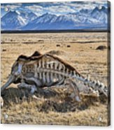 Carcass With A View Acrylic Print