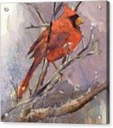 Cardinal - Male Acrylic Print