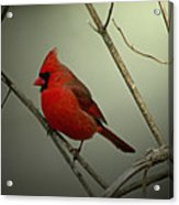 Cardinal And The Setting Sun Acrylic Print