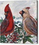 Cardinal Berries Acrylic Print