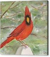 Cardinal Acrylic Print