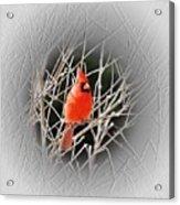 Cardinal Centered Acrylic Print