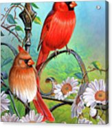Cardinal Day 3 Acrylic Print