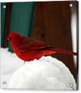 Cardinal In Snow II Acrylic Print