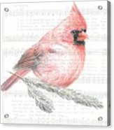 Cardinal On Joy To The World Acrylic Print