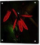 Cardinal  Plant Woodcut Acrylic Print