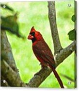 Cardinal Render Acrylic Print