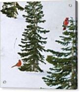 Cardinal Trees Acrylic Print
