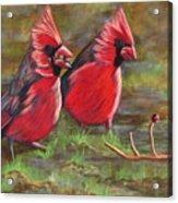 Cardinal Two Acrylic Print