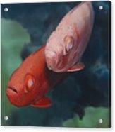 Cardinalfishes Acrylic Print