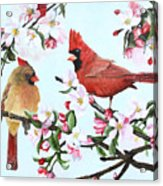 Cardinals And Apple Blossoms Acrylic Print
