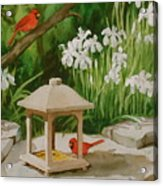 Cardinals Feeding Acrylic Print