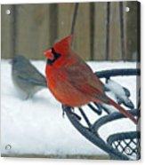 Cardinals Snow Day Acrylic Print