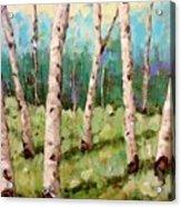 Carefree Birches Acrylic Print