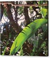 Caribbean Banana Leaf Acrylic Print