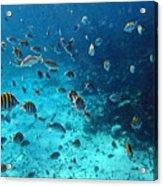Caribbean Blue_1 Acrylic Print
