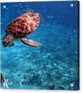 Caribbean Blue_13 Acrylic Print