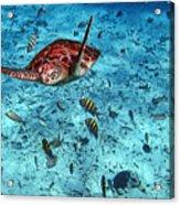 Caribbean Blue_6 Acrylic Print