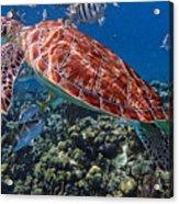 Caribbean Blue_7 Acrylic Print