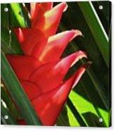 Caribbean Color Acrylic Print