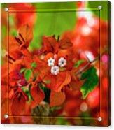 Caribbean Floral Surprise Acrylic Print