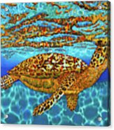 Caribbean Hawksbill Sea Turtle Acrylic Print