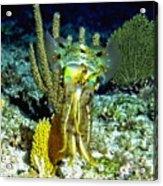 Caribbean Squid At Night - Alien Of The Deep Acrylic Print