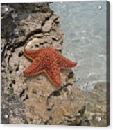 Caribbean Starfish Acrylic Print