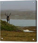 Caribou Fog Acrylic Print