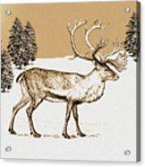Caribou Acrylic Print