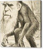 Caricature Of Charles Darwin Acrylic Print