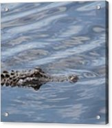 Carolina Beach Marina Alligator Acrylic Print