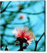 Carolina Flower And Bird Acrylic Print