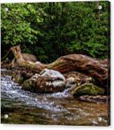Carolina Stream Acrylic Print
