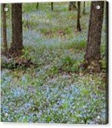 Carpet Of Blue Acrylic Print