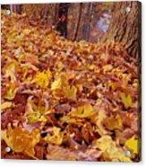 Carpet Of Fall Leaves Acrylic Print