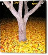 Carpet Of Leaves Acrylic Print