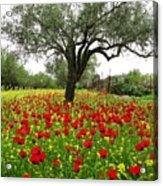 Carpet Of Poppies Acrylic Print