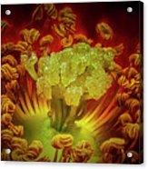 Carpet Rose Center Acrylic Print