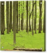 Carpeted Forest Acrylic Print