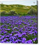 Carrizo Plain National Monument Wildflowers Acrylic Print