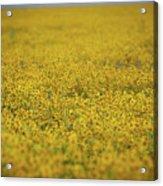 Carrizo Super Bloom Acrylic Print