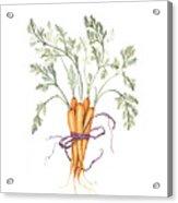 Carrot Harvest Acrylic Print