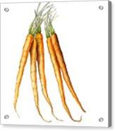Carrot Variation Acrylic Print