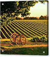 Cart Wheels At Barossa Valley Vineyard, South Australia Acrylic Print by Peter Walton Photography