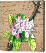 Carte Postale. Blossoming Apple Acrylic Print
